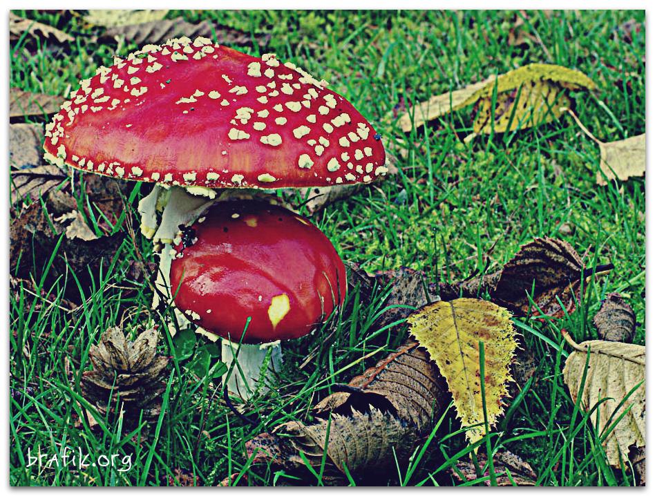 Завораживающие гифки: как растут грибы.