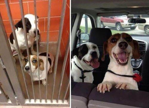 Собаки до и после того, как обрели любящий дом
